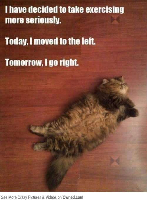 funny fitness photo - Cat