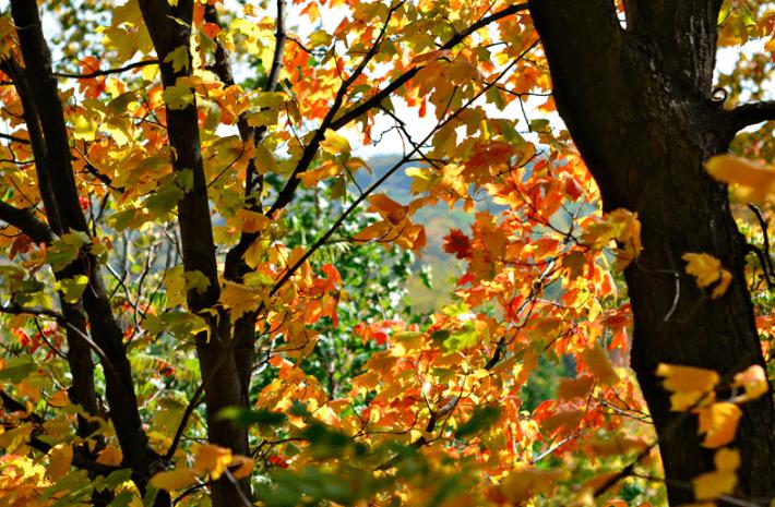 Pretty Fall Photos