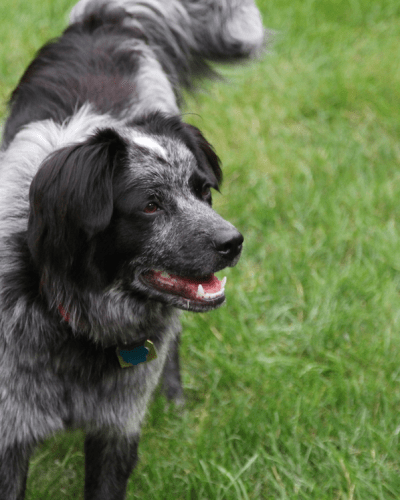 From Dog Shelter to Health Coach – Benefits of Dog Ownership