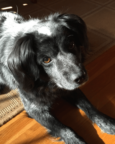 Taking Good Care of Our Rescue Dog – Printable Health Checklist Too!