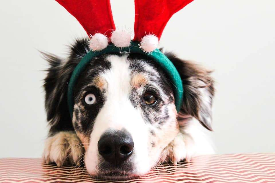 5 Things to Consider Before Giving a Puppy as a Holiday Gift