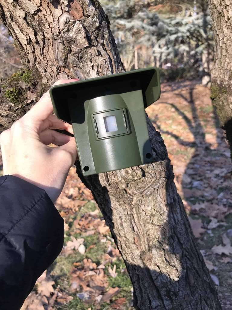 Posting guarding motion detector on tree