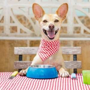 Can Dogs Eat Rice? Human Foods Dogs Can and Can't Eat